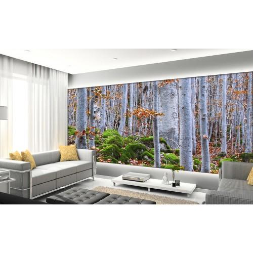 Фототапет гъста брезова гора цифров печат максимален размер 260х400см модел 28072