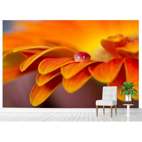Фототапет капка цвете цифров печат максимален размер 260х400см модел 28056