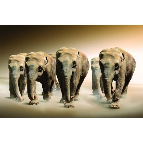 Фототапет модел 28005 слонове
