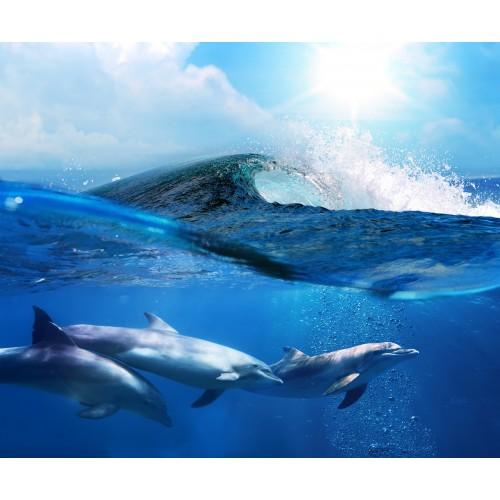 Фототапет модел 28006 делфини