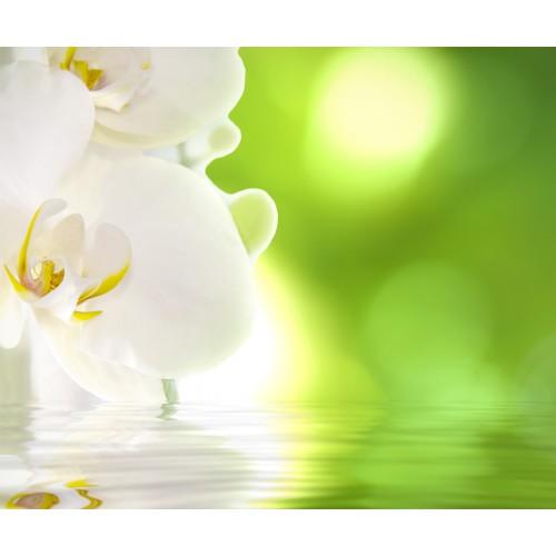 Фототапет модел 28012 орхидея