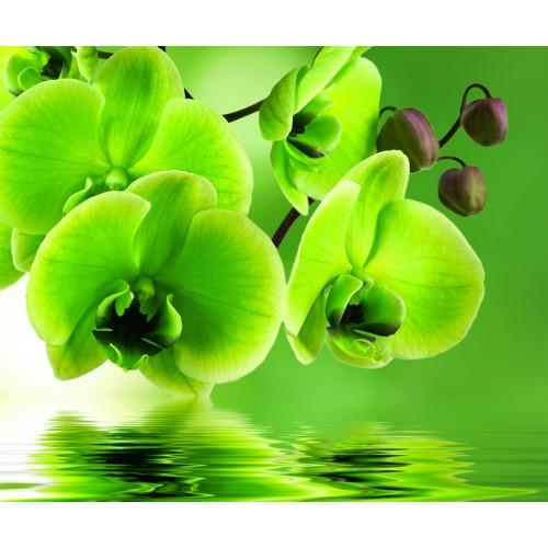 Фототапет модел 28013 орхидея