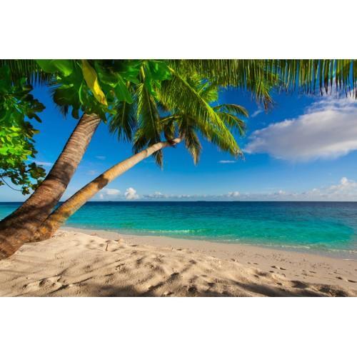 Фототапет модел 28037 плаж палми