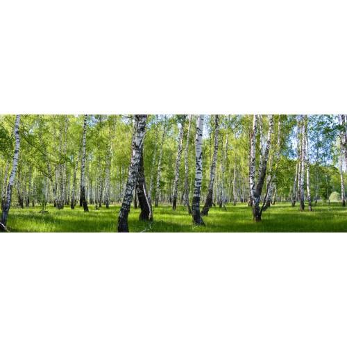 Фототапет модел 28052 брезова гора