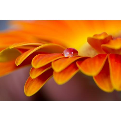 Фототапет модел 28056 цвете