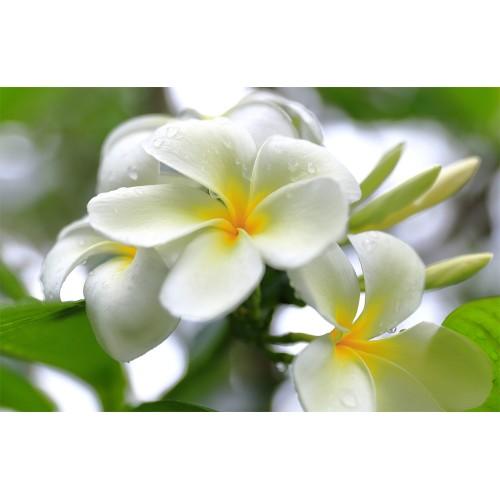 Фототапет модел 28092 цвете