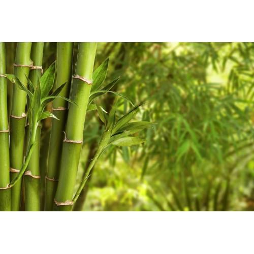 Фототапет модел 28100 бамбук