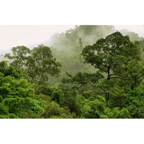 Фототапет модел 28138 гора