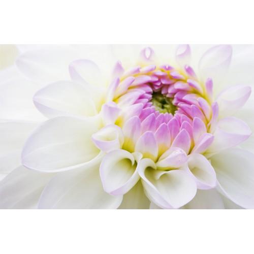 Фототапет модел 28172 цвете