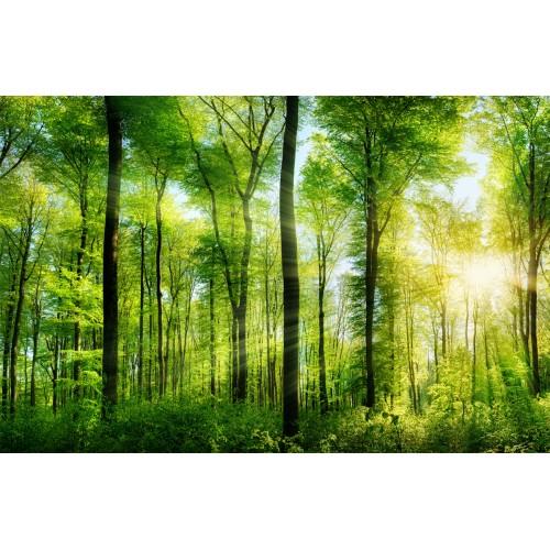 Фототапет модел 28180 гора