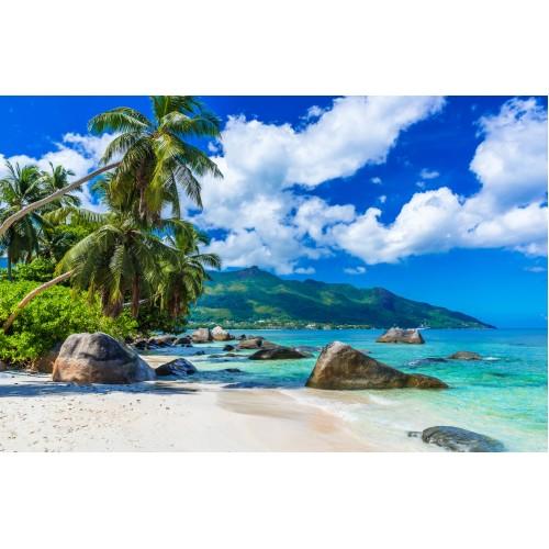 Фототапет модел 28191 плаж палми