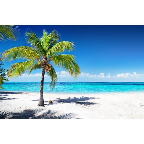Фототапет модел 28192 плаж палми