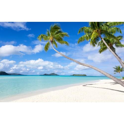 Фототапет модел 28195 плаж палми