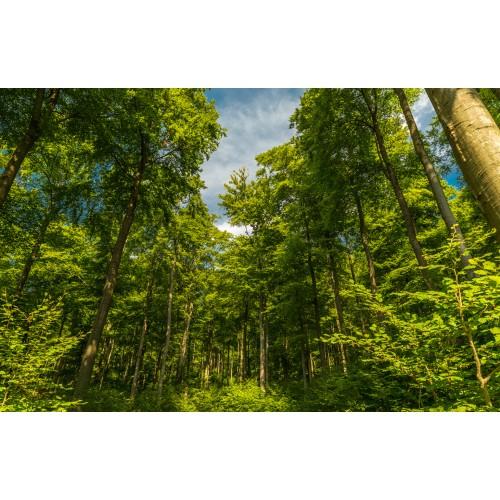 Фототапет модел 28198 гора