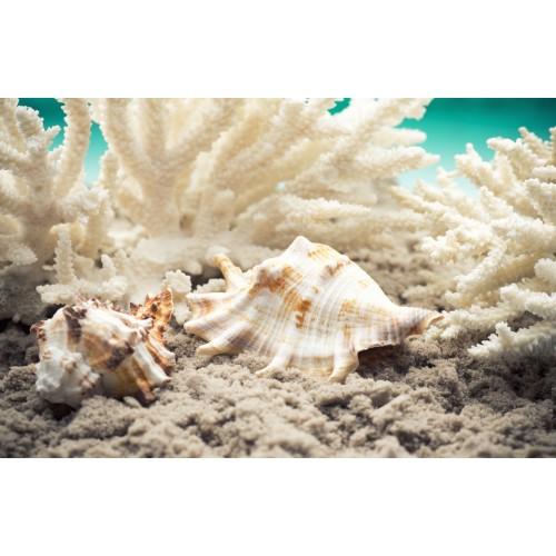 Фототапет модел 28203 корали