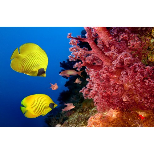 Фототапет модел 28204 корали