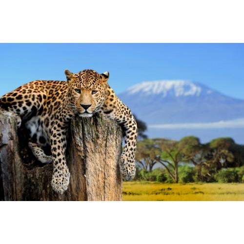 Фототапет модел 28212 Леопард