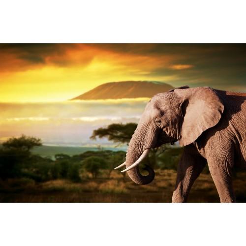 Фототапет модел 28213 слон залез