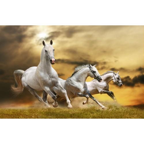 Фототапет модел 28214 коне