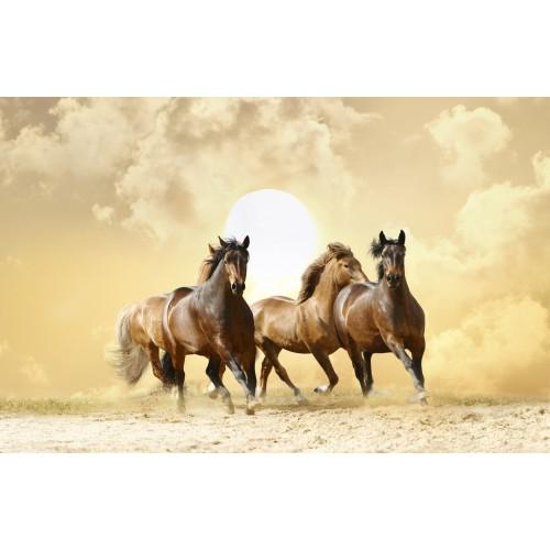 Фототапет модел 28215 коне