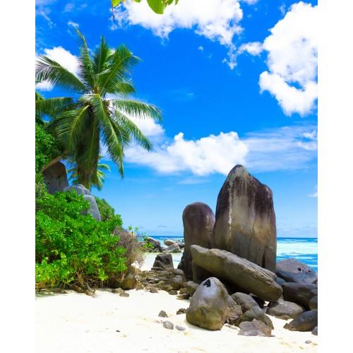 Фототапет модел 28254 плаж палми