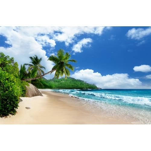 Фототапет модел 28255 плаж палми