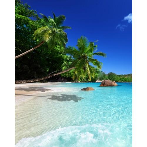 Фототапет модел 28260 плаж палми