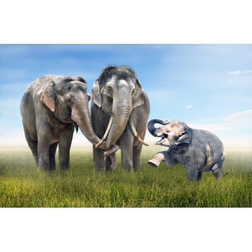 Фототапет модел 28289 слонове