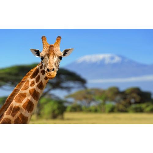 Фототапет модел 28299 Жираф