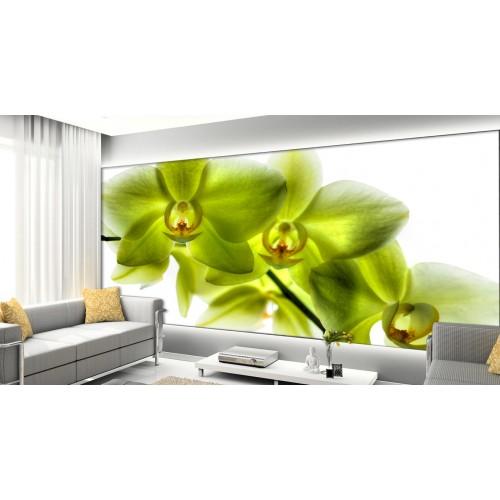 Фототапет модел 28385 орхидея