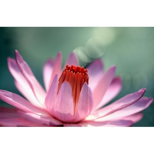 Фототапет модел 28333 цвете