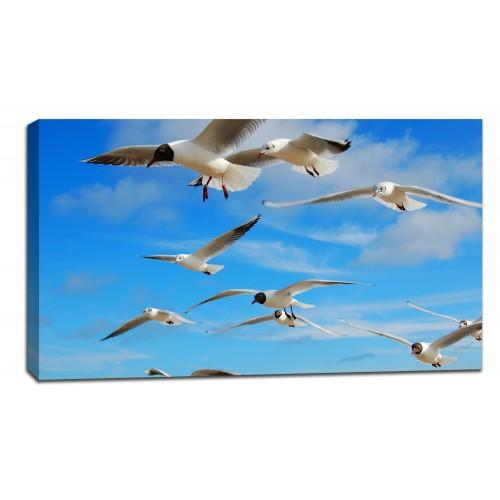 Картина от канава Модел 14056 чайки
