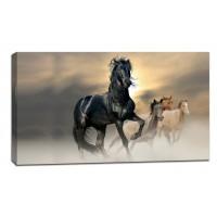Картина от канава Модел 14062 черен кон