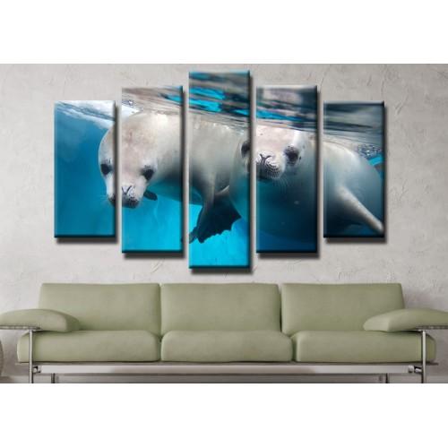 Декоративни панели и картини от канава Модел 13 434 тюлени  пет части